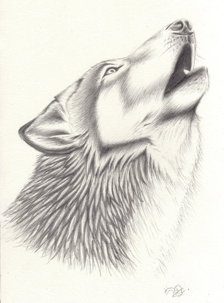 Simple Howling Wolf Drawing