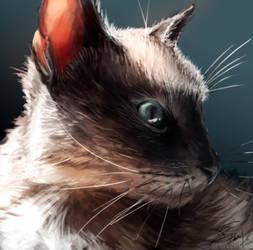 My Cat, Ra