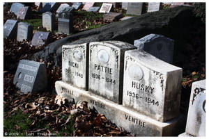 Hartsdale Pet Cemetery 3