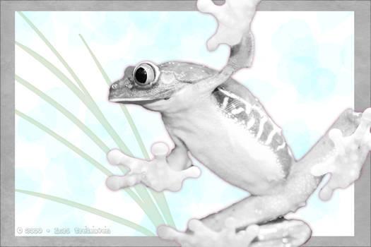 Ethereal Tree Frog