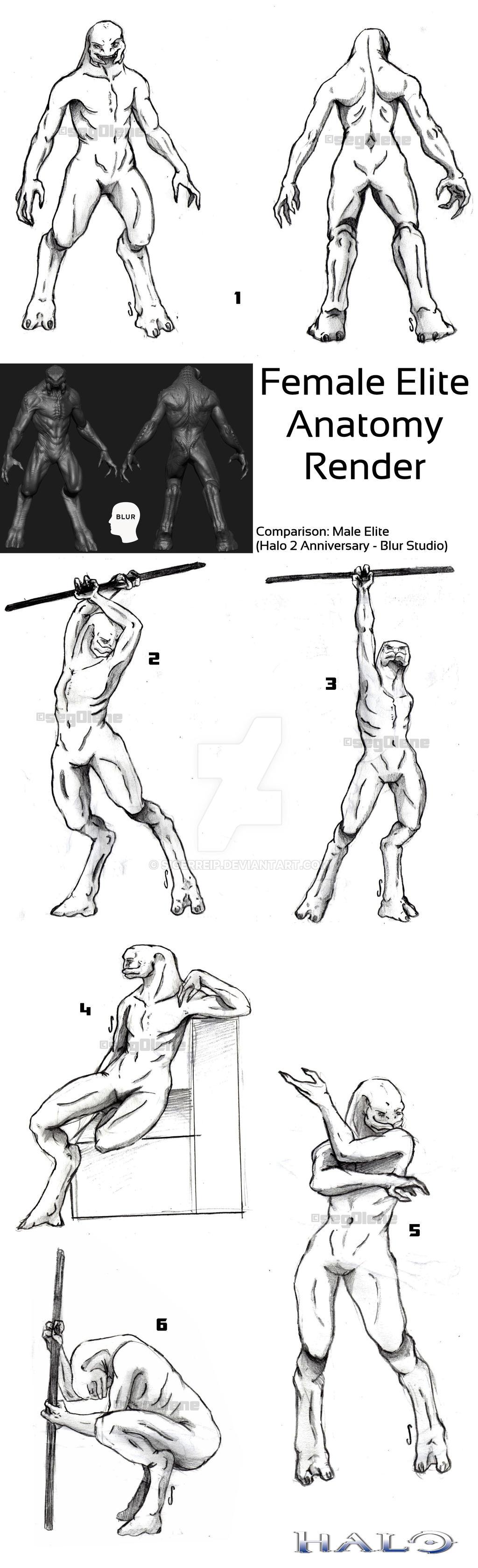 Halo elite anatomy