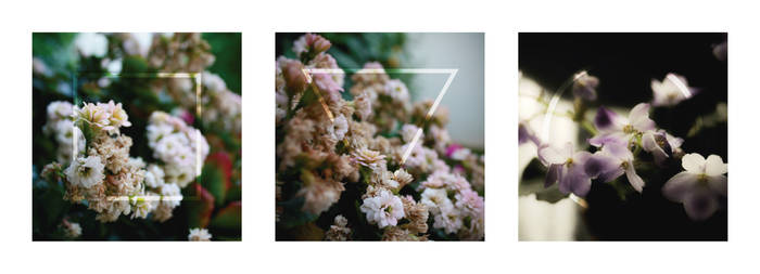 Aurorae - Old Flowers Triptych