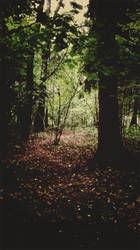 Forest [12]