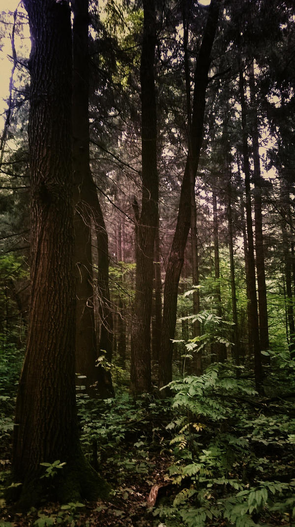 Forest [13]