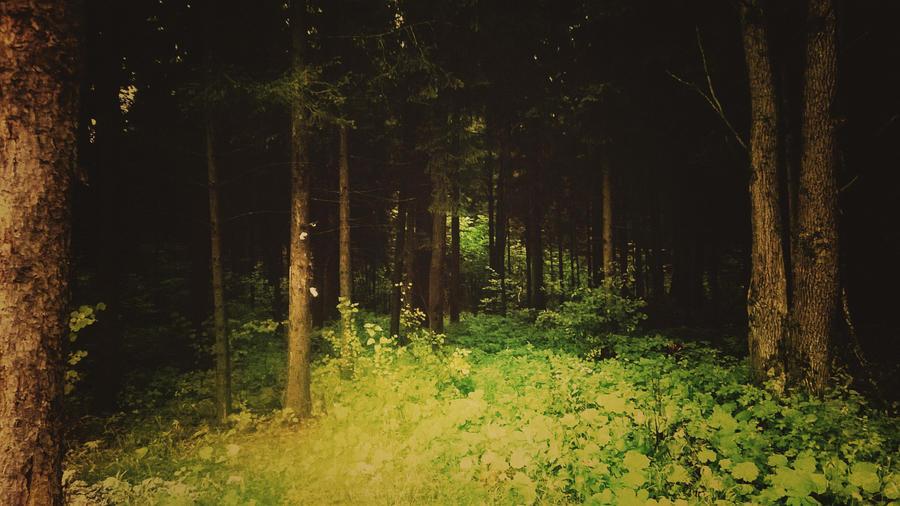 Light Glade in the Dark Forest