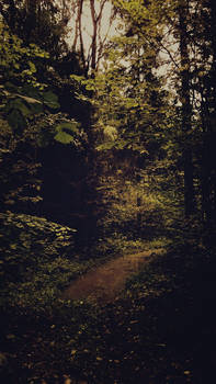 Forest [16]