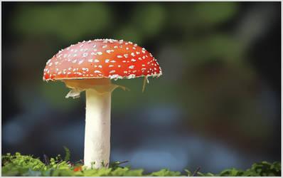 Photorealistic mushroom study