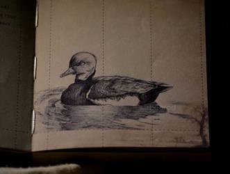 Duck by b3tZ