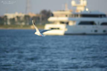 bird 002