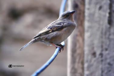 Bird by IMamdouhPhotography