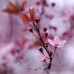Flower Tree v2 by chirilas