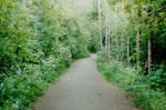 evening path