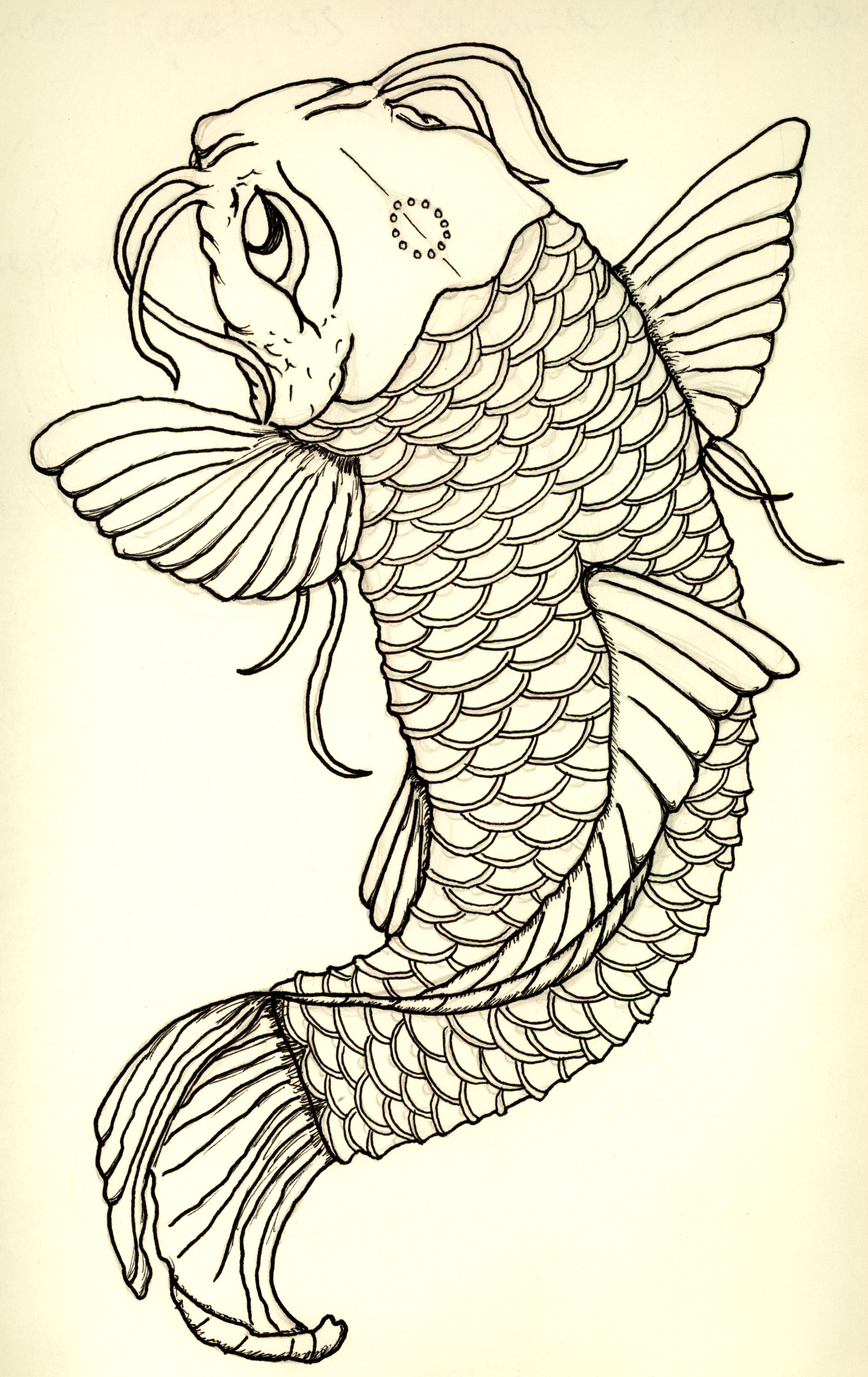 This is a picture of Delicate Japanese Koi Fish Drawing