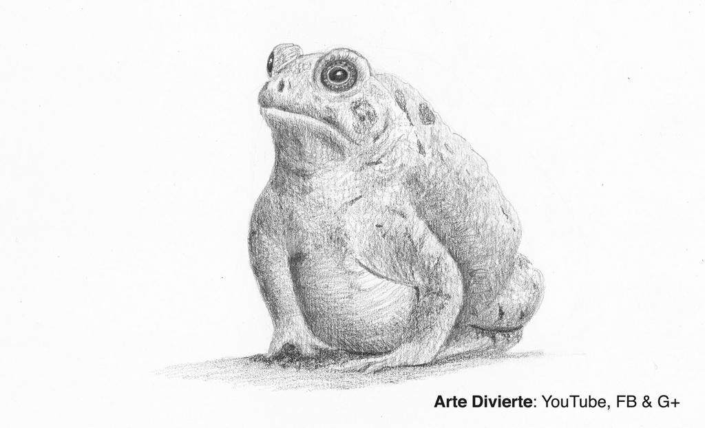 Como dibujar un sapo (rana) - Narrado by LeonardoPereznieto