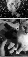 Soko, my stupid cat (2)