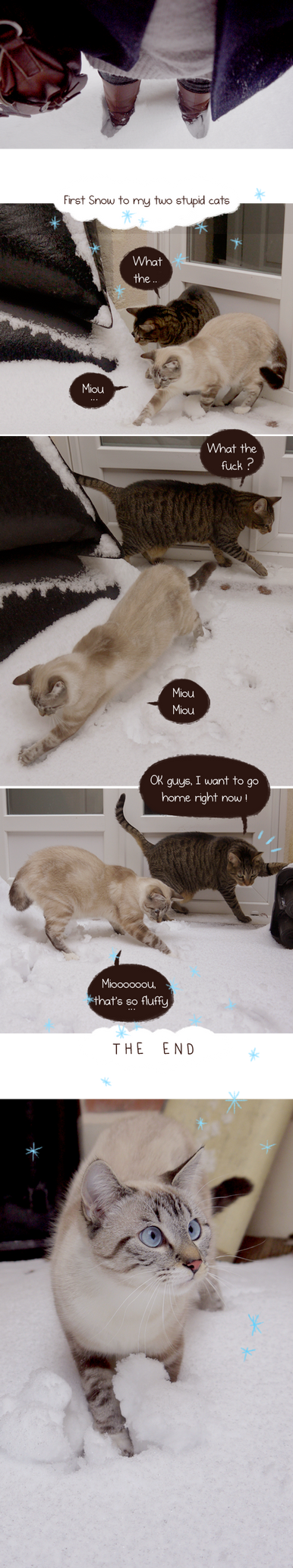 First snow for my two stupid cats by tshipbd