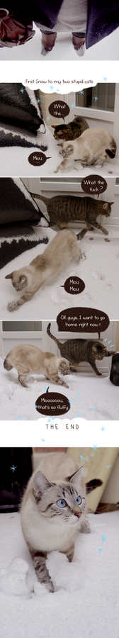 First snow for my two stupid cats