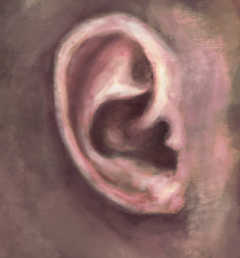 Ear study by Bengalensis