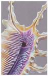 Shells - Scorpion Shell