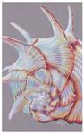 Shells - Angaria Shell