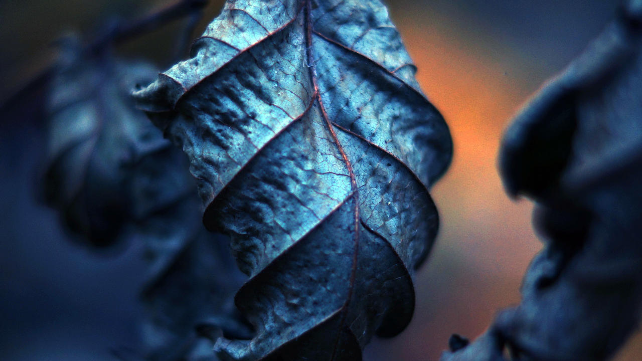 Untitled Leaf by NovaFlux