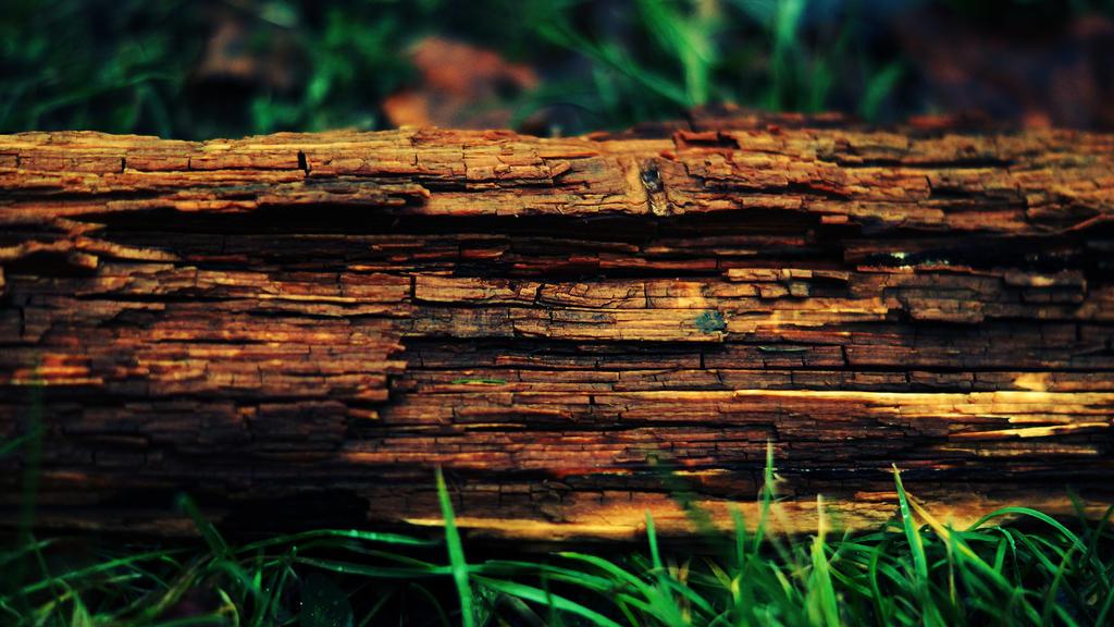 Log by NovaFlux