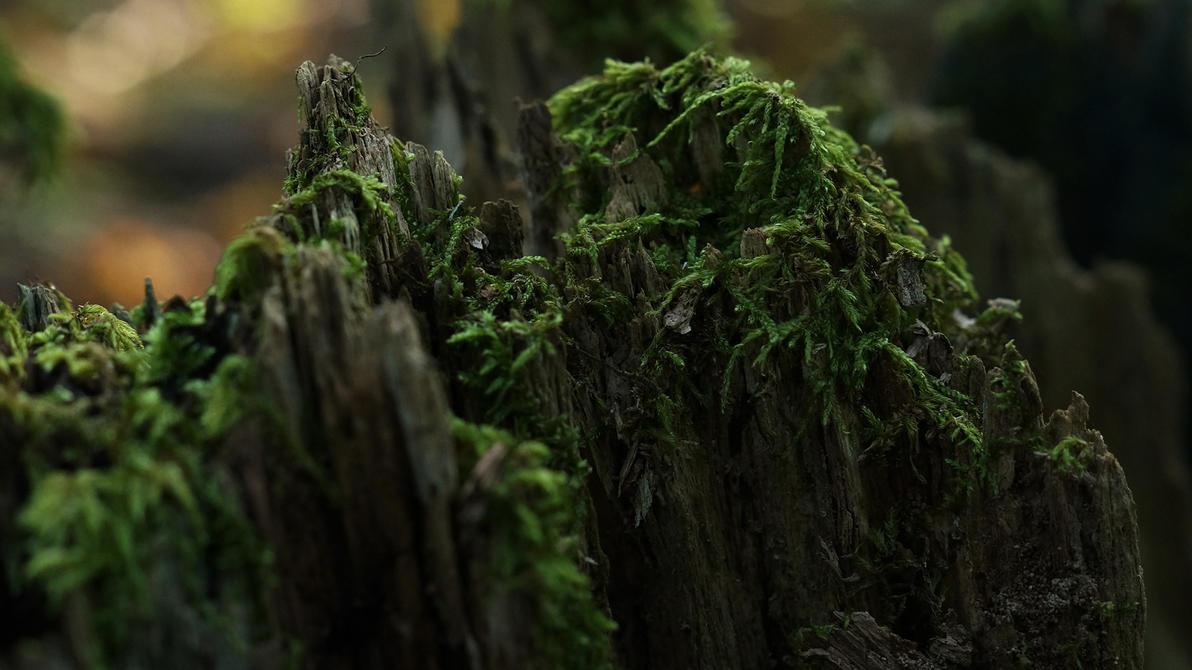 Wooden Mountain by NovaFlux