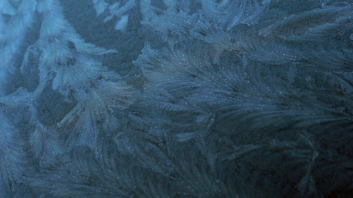 Frost leaves by NovaFlux