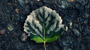 Tree Of Life Leaf 4k