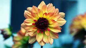 Manipulated Flower 4K