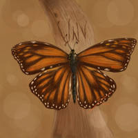 Commish: Butterfly Remembrance by BlackDelphin