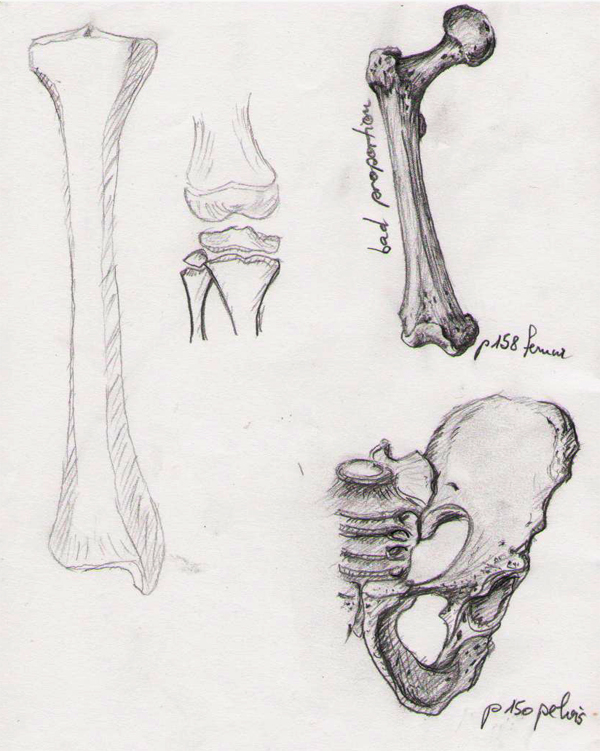 Bone Studies 01 by BlackDelphin