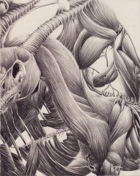 Anatomical Mess