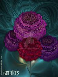 Carnations by leguen