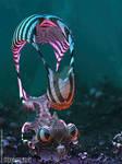Ascidian by leguen