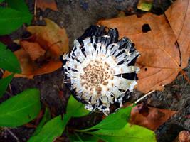 cryotainer Mushroom s fall