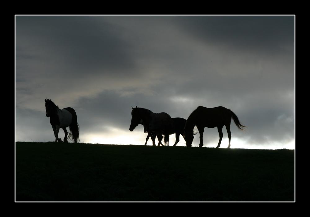 Konji - Page 2 Horses_by_gimbulate