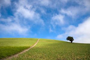 the path home by chuckhead