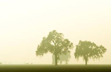 fog 8