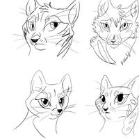 warrior cats