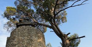 moulin vent provence