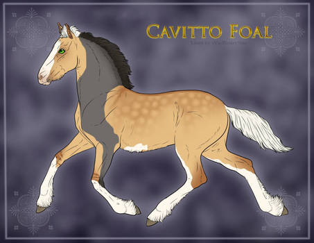 1370 Foal Design