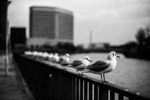 Lined Up II by TimGrey