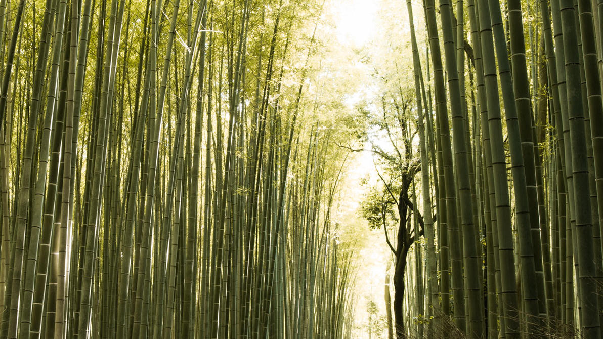Arashiyama Bamboo Forest by TimGrey
