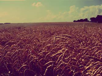 field by MrVolcom303