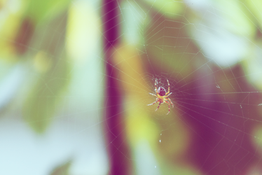 Just a spider