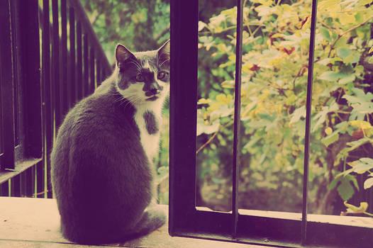 hi im cat