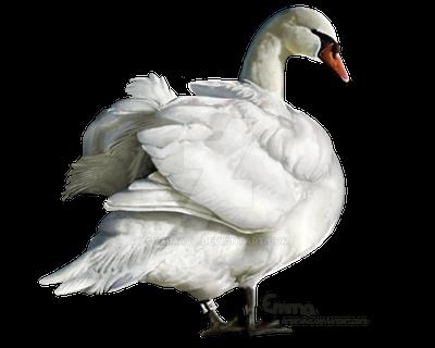 Swan by EmmaVZ