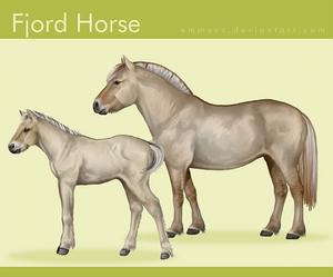 Fjord Horse v2