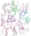 Greyhound studies
